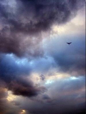 bird in storm